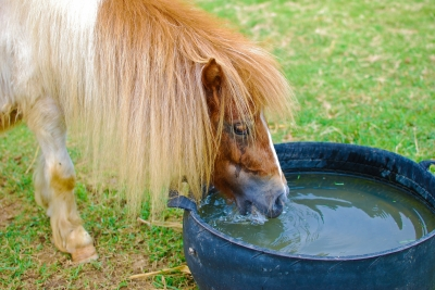 Can You Lead a Horse To Water?